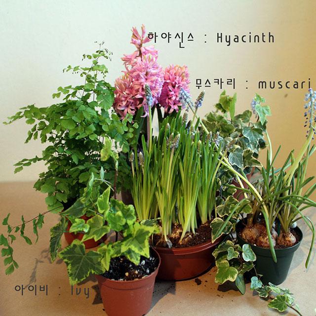 꽃을 피우는 식물, 라인이 예쁜 식물 등을 적절히 선택한다.