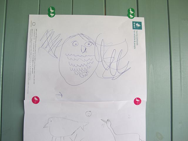 아이들이 관찰한 새 그림, Source: Caroline ham