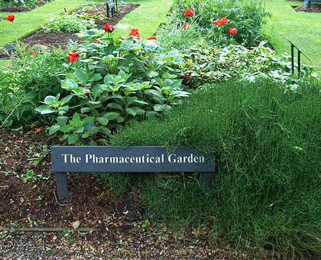 Source: http://www.plantsgalore.com/gardens/uk/UK_Chelsea-Physic-2006.htm /